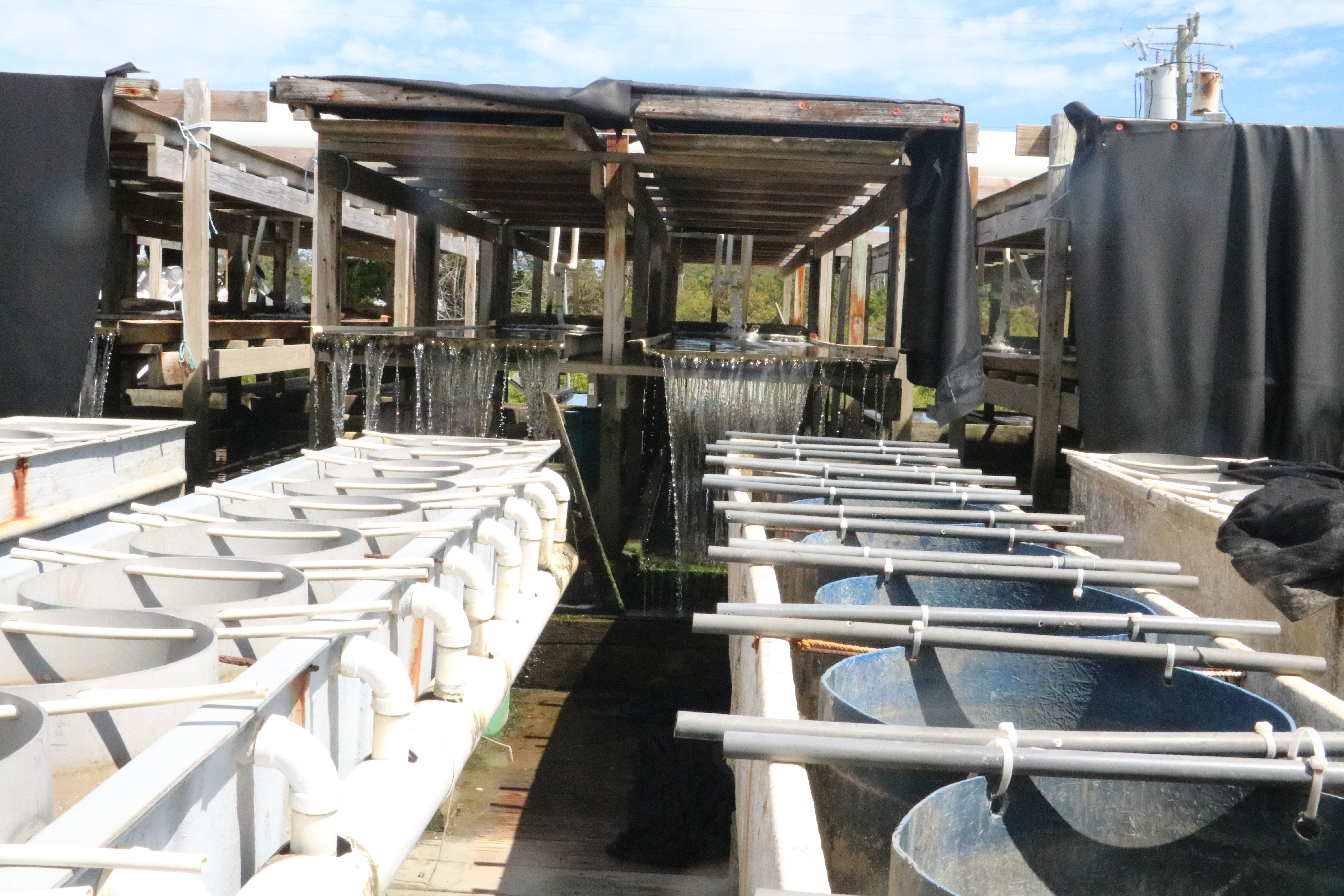 Raceways for Oyster Production