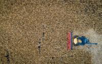 联合收割机收割玉米田的无人机照片