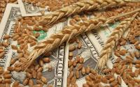 Wheat on top of $1 bills.