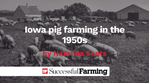 在20世纪50年代缩略图爱荷华州生猪养殖
