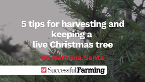 Thumbnail image for 5 tips for harvesting and keeping a live Christmas tree video
