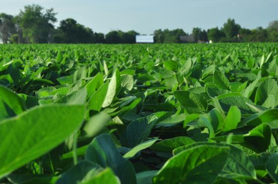 EPA Responds to Ninth Circuit Court's Opinion on Dicamba Registrations