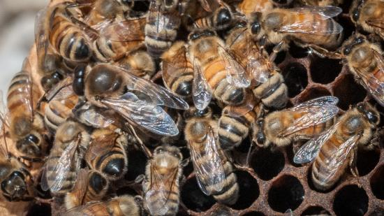 Colony collapse toll is highest in four years for U.S. honeybees