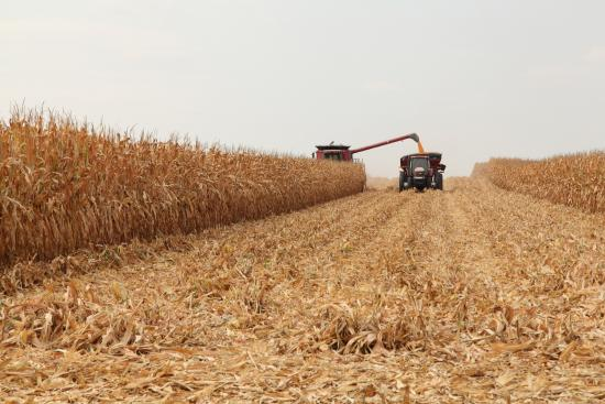 5% of the U.S. corn crop has been picked, USDA says  image