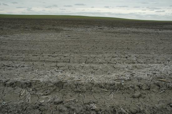 Drought forcing farmers in the Dakotas to make difficult decisions