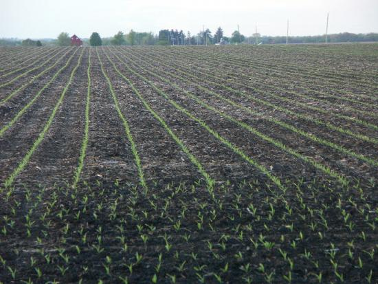 88% of the U.S. corn crop is seeded, below expectations, USDA reports