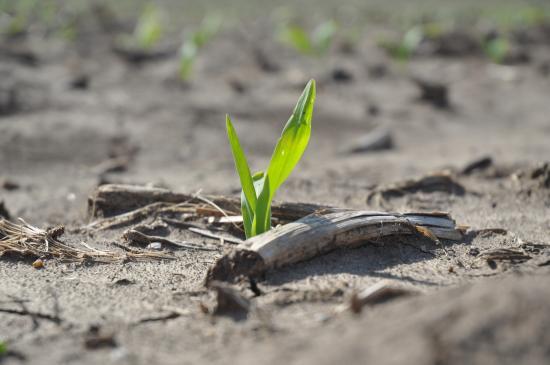 Two Mosaic Products Earn Enhanced Efficiency Fertilizer Designation